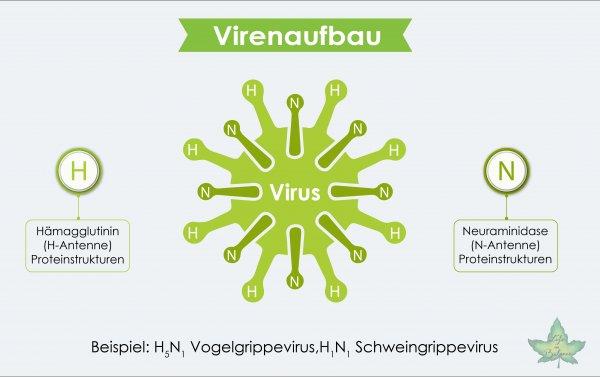 infografik virenaufbau