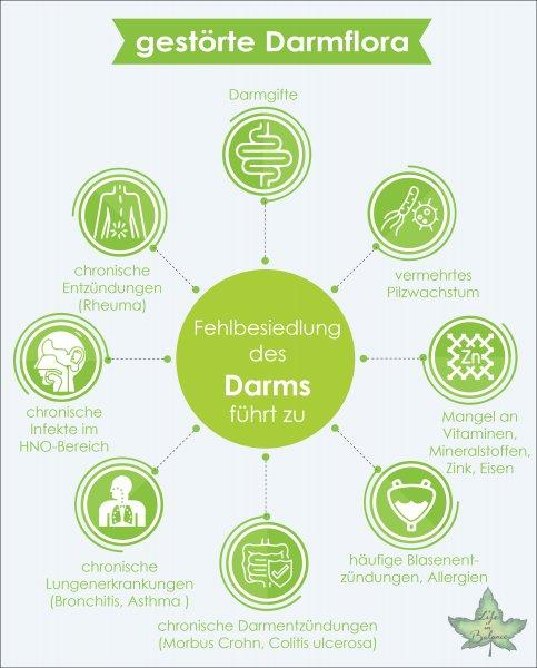 infografik gestoerte darmflora