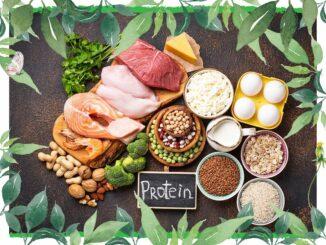 lebensmittel proteine